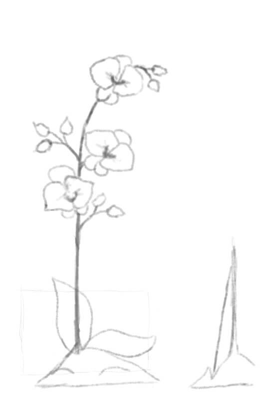 Schets glazen orchidee tak